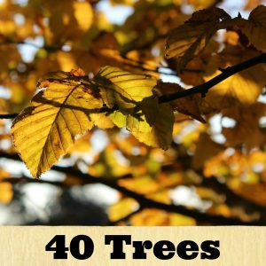 A tree poster with a caption saying 40 trees