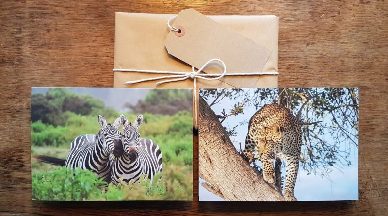 Zebra and Leopard greetings cards