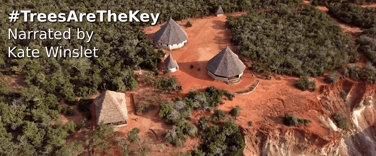 #TreesAreTheKey Narrated by Kate Winslet - Boré Forest Centre from the air