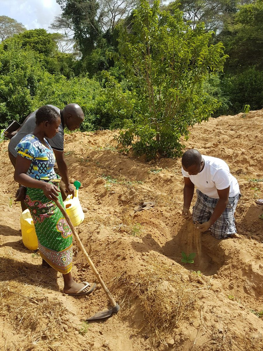 Word Forest Organisation planting trees in Kenya