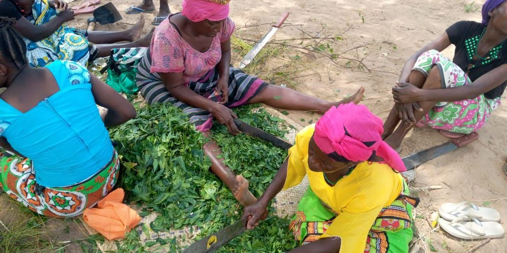 Mothers of the Forest making natural pesticides to spray on the crops