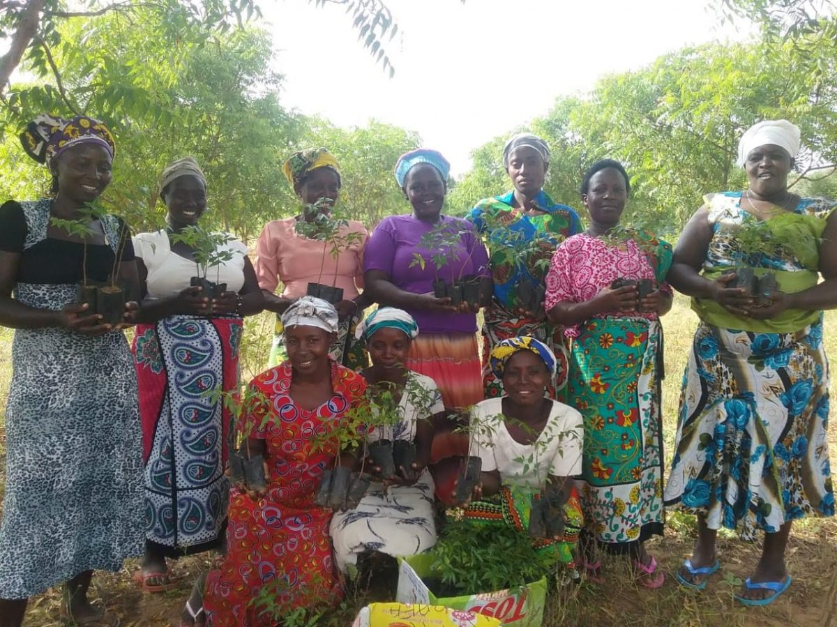 Trees being planted by Mothers of the Forest