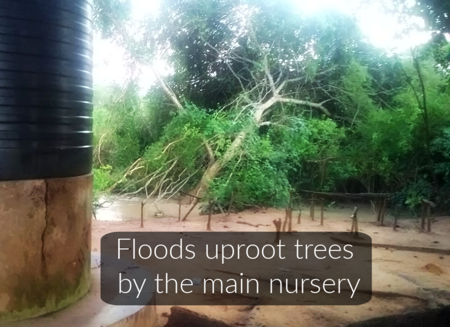 Floods uproot trees by the main nursery