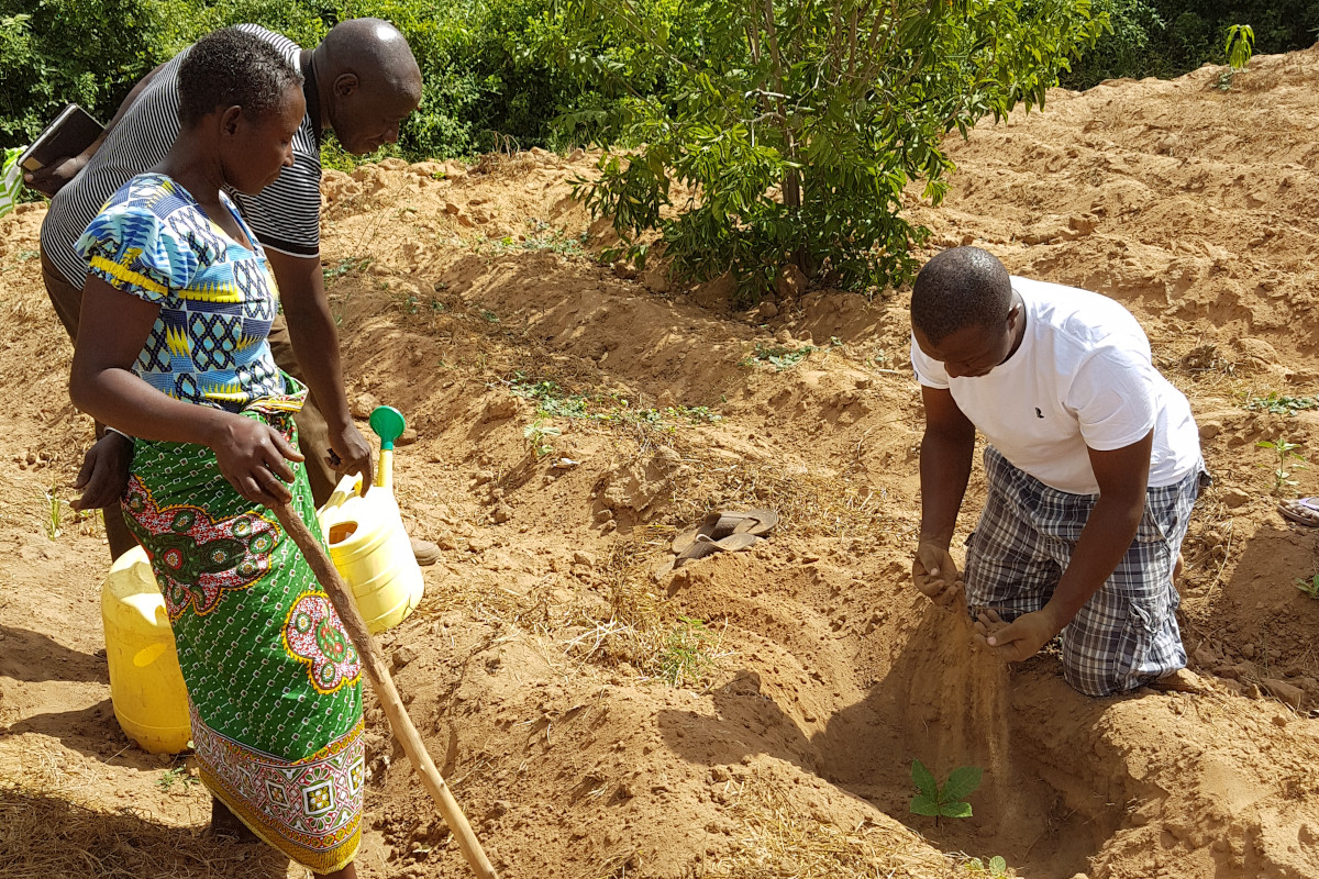 Tree planting in Kenya