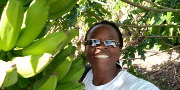 Eva and the banana harvest