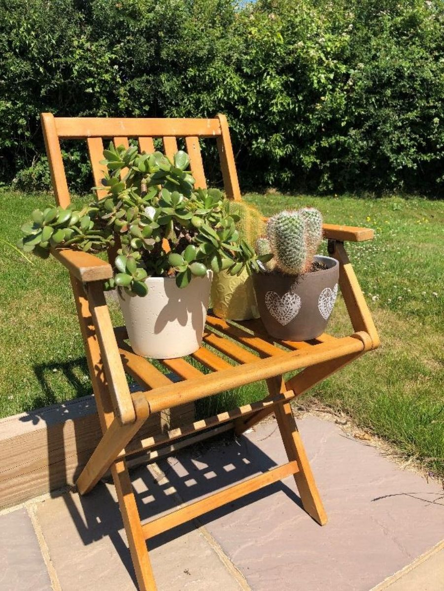Two chilli plants and an array of cacti on a chair in a garden