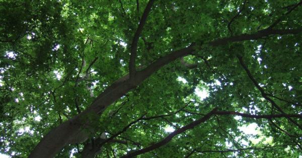 Dappled sunlight through leaves