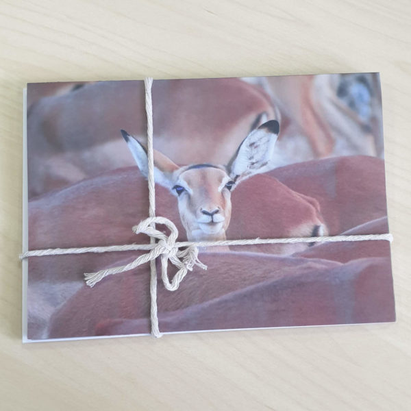 Pack of Kenyan wildlife greeting cards