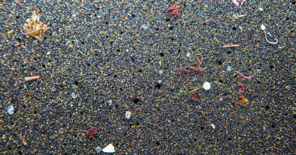 Microplastics on the seabed in the Azores Raceforwater, CC BY-SA 4.0, via Wikimedia Commons