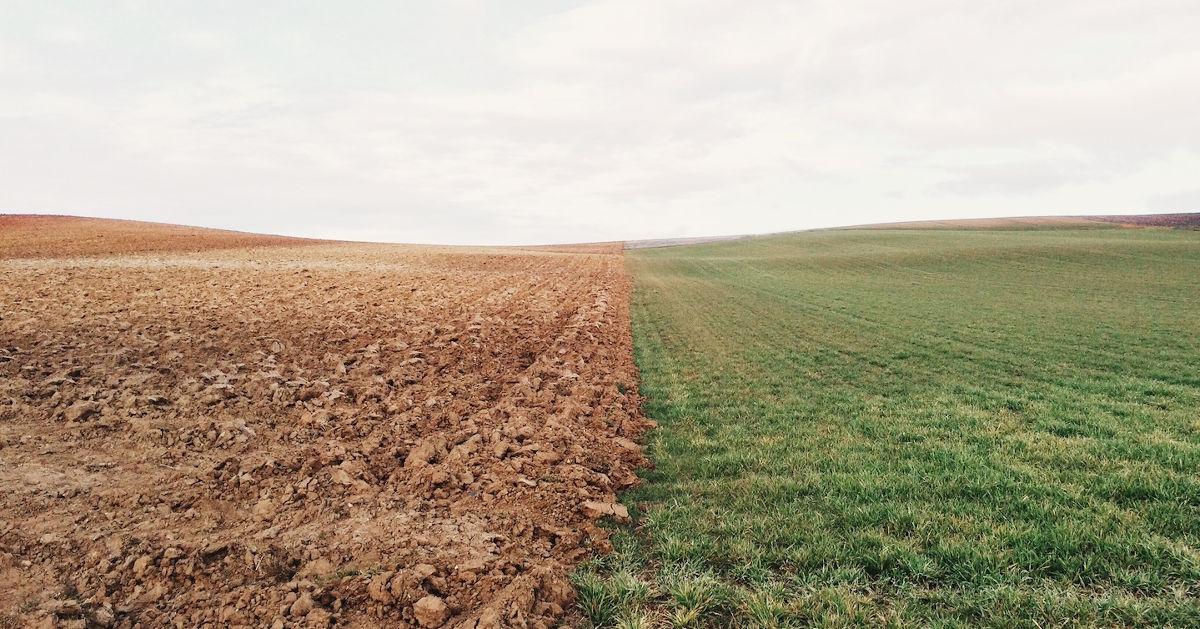 Tilled soil and grassland