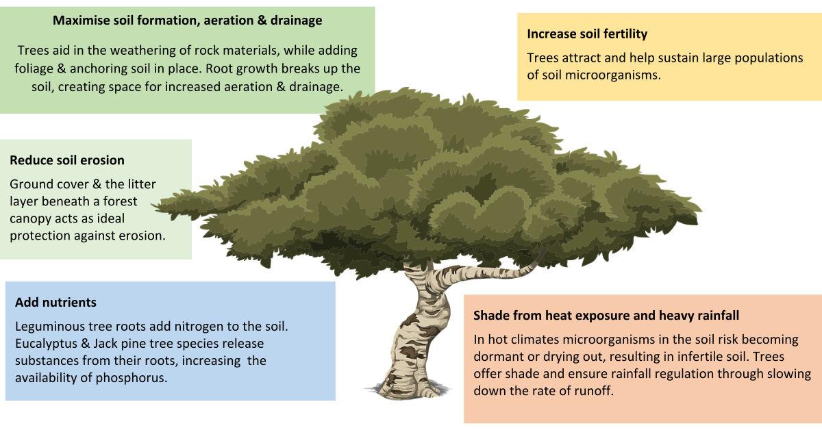 Value of Trees - Soil Health