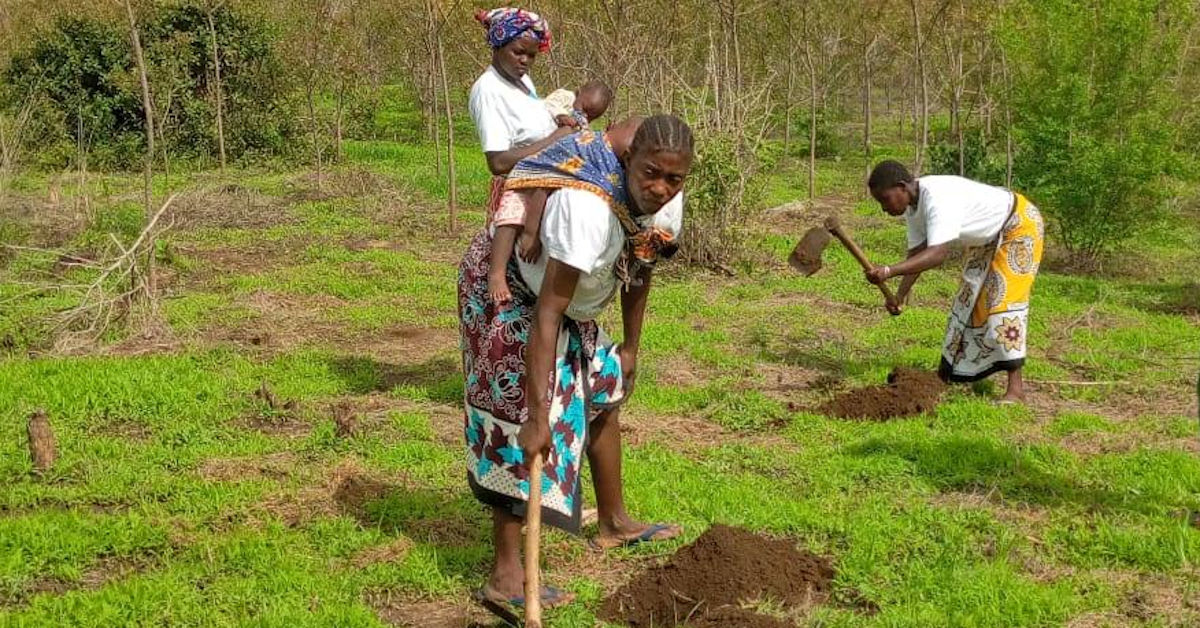 Women digging to plant trees