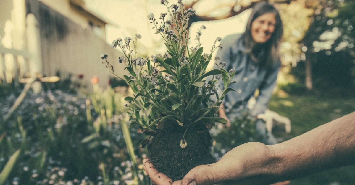 Hand holding showing a plant to a smiling woman