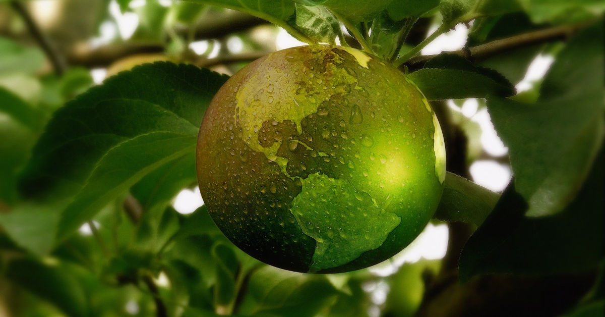 Earth as an apple on a branch