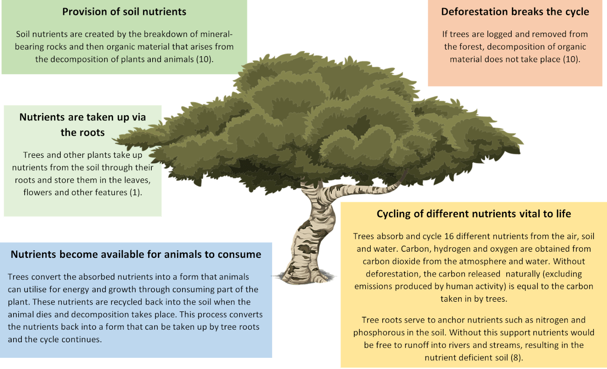 Trees and their role in nutrient cycling