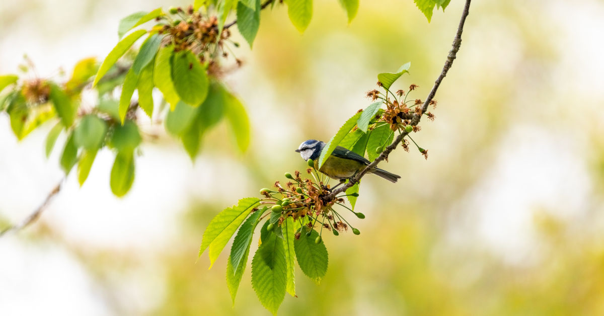 Blue and green bird on green plant by Andy Holmes on Unsplash