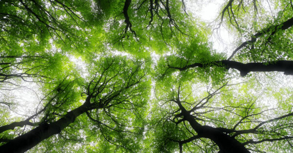 Looking up to the sky through trees by Ed van duijn on Unsplash