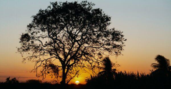 sunset behind trees by Gilberto Olimpio on Unsplash