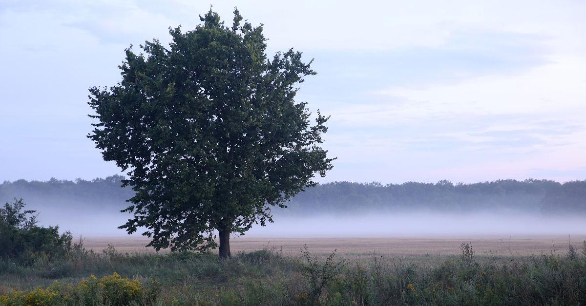A tree in a field by Mateusz Wyszyński from Pixabay
