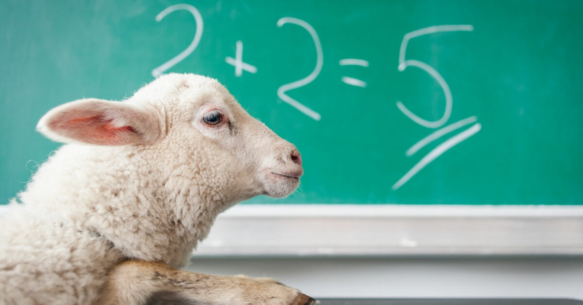 A sheep learning maths by Michal Matlon on Unsplash
