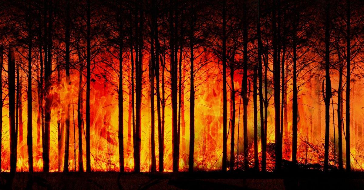 Forest fire by Gerd Altmann from Pixabay