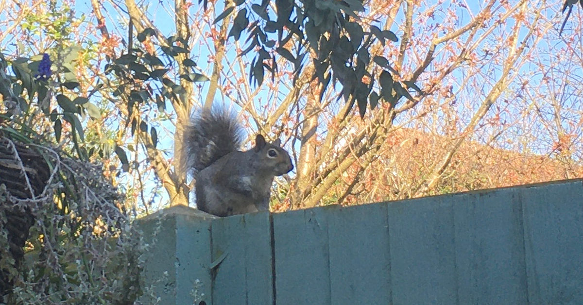 A squirrel on a fence