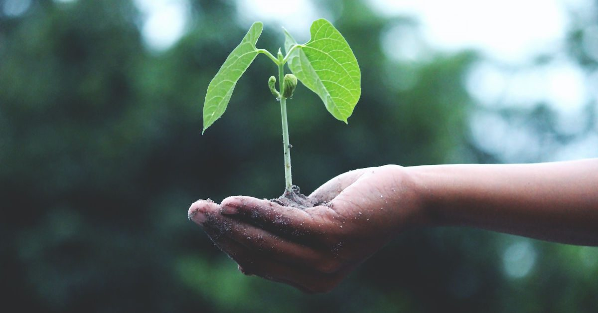 A seedling in a persons hand by Akil Mazumder from Pexels