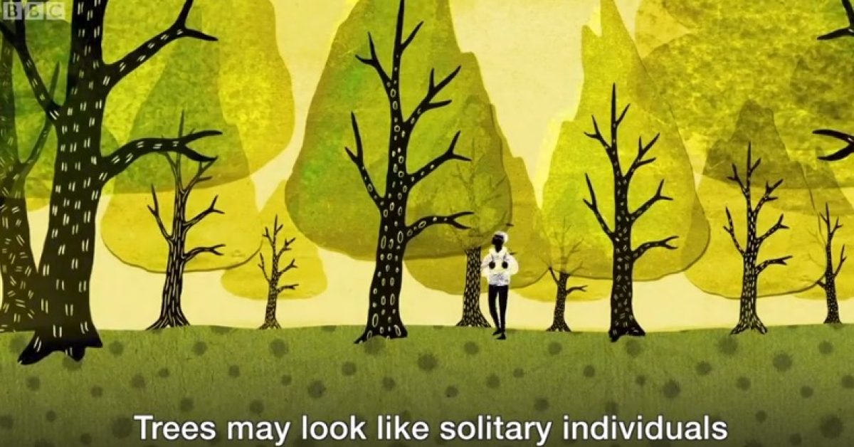 BBC tree video