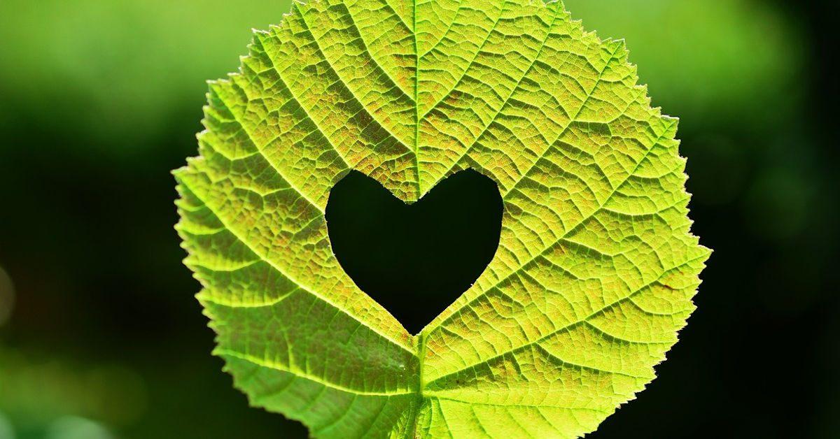 Leaf Heart by CongerDesign on Pixabay