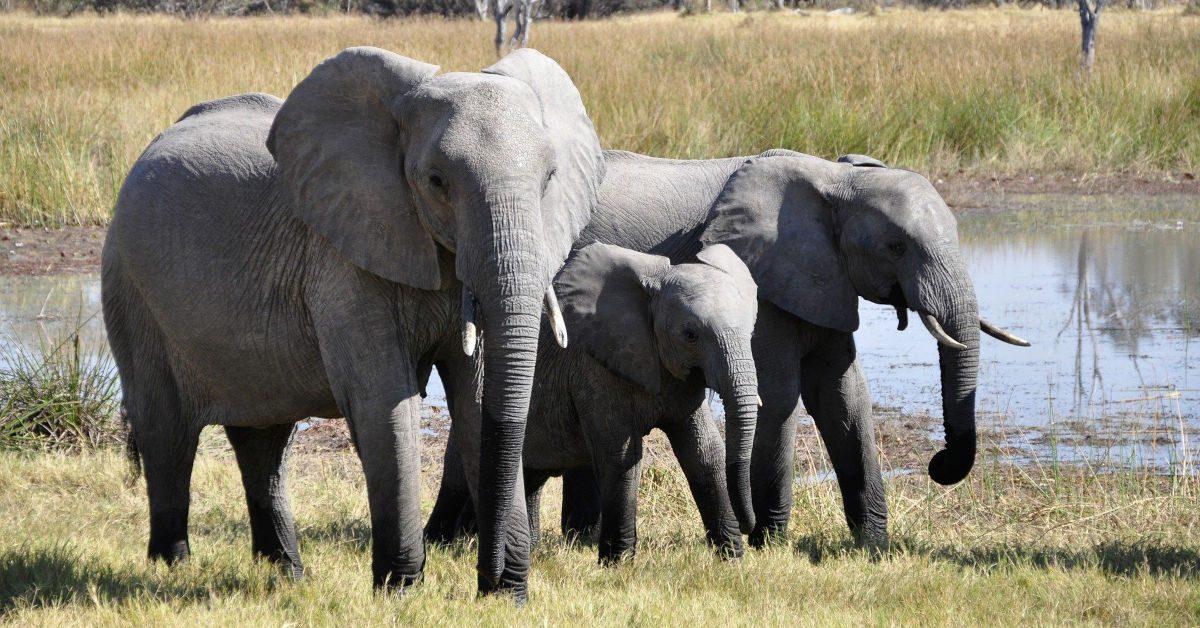 Three elephants in Kenya by katja from Pixabay