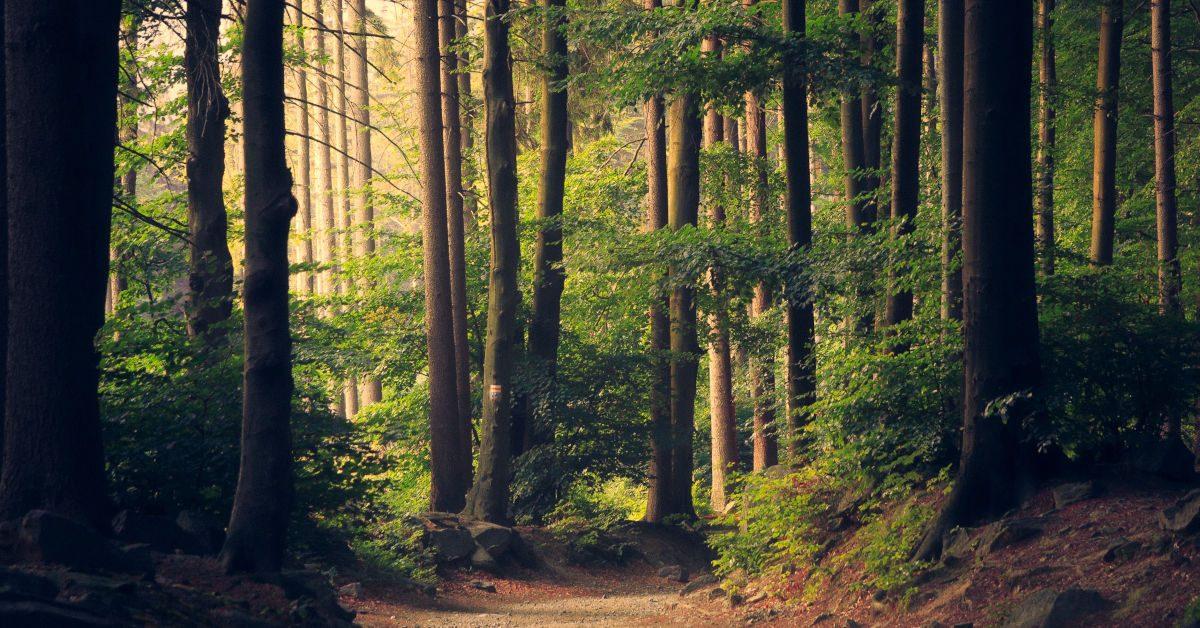 UK Woodland by Lukasz Szmigiel on Unsplash